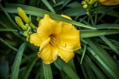 Close-up om bloei in wereld van installatie te bloeien royalty-vrije stock fotografie