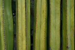 Free Close Up On A Wall Of Cactus Stock Photography - 11708892