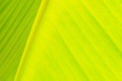 Close-up onder banaanblad Stock Foto's