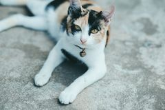 Close up One cat on the cement floor royalty free stock photography