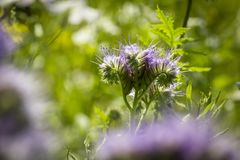 Close up of one natural meadow, Backlit photograph . Royalty Free Stock Photography