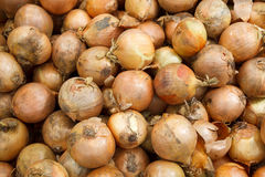 Close up onion Stock Photography