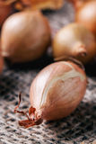 Close up of onion Royalty Free Stock Photos