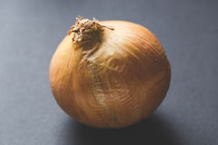 Close up of an onion Stock Images