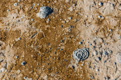 Closeup of a muddy beach with helical excrements of a lugworm. Close-up of an oozy and colorful beach fragment with coiled castings of a sandworm or Arenicola Royalty Free Stock Photos