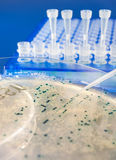 Close-up op bacteriële kolonies stock afbeelding