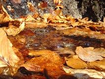 Close-up op de thermische lente Stock Afbeeldingen