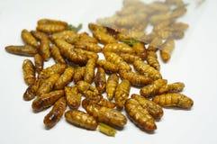 Close-up op edibleszijderupsen royalty-vrije stock afbeelding