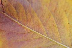 Close-up op geel blad stock fotografie