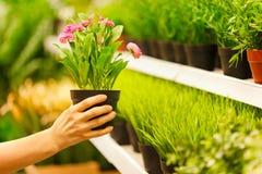 Close-up op handen die potten van bloemen nemen Royalty-vrije Stock Foto's