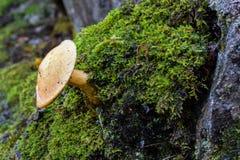 Close-up op het wilde paddestoel groeien aan de kant van een boom stock foto