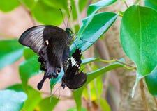 Close-up op tropische butterlfy stock foto's