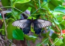 Close-up op tropische butterlfy royalty-vrije stock afbeeldingen