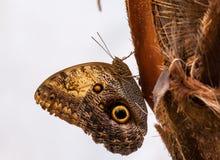 Close-up op tropische butterlfy royalty-vrije stock foto