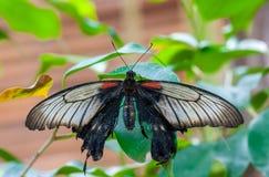 Close-up op tropische butterlfy royalty-vrije stock fotografie
