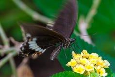 Close-up op tropische butterlfy royalty-vrije stock afbeelding
