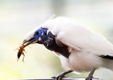 Vogel met prooi royalty-vrije stock afbeeldingen