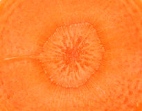 Close up of orange carrot slice center Royalty Free Stock Photos