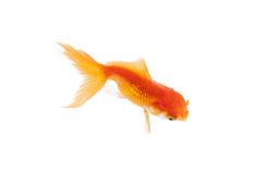 Close up of orange fish swimming in fishbowl Stock Photo