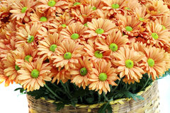 Close up orange flower in basket Stock Photo