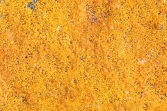Close-up orange lichen in rain forest. Royalty Free Stock Photography