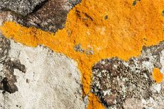 Close-up orange lichen on stone. Stock Photos