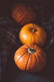 Close up orange pumpkins on plaid background. Fall symbol wallpaper, autumn cosiness. Thanksgiving Day concept. Still Stock Image