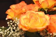 Close up of orange roses Stock Photo