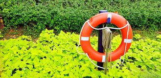 Close up orange rubber lifejacket in the garden with many green leaves background and copy space stock photography