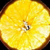 Close-up of orange slice Stock Photo