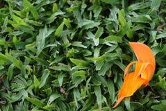 Close-up oranje bloemen op groene grassen Royalty-vrije Stock Foto's