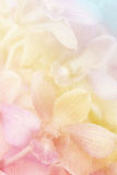 Close up orchid flower. In soft color and blurred style on burlap textured background Royalty Free Stock Images