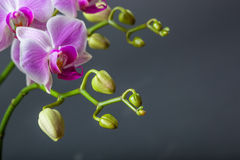 Close up of orchid flower Stock Photos