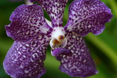 Close up orchid in garden, colorful flower Stock Image