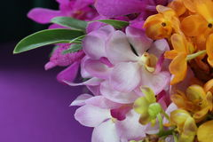Close up orchid in garden, colorful flower Royalty Free Stock Photography