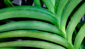 Close up orchid green leaf on nature. Background Stock Photo