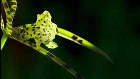 Close up of orchid has its own characteristic form and color stock image