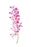 Close up of orchids on white background Royalty Free Stock Photos