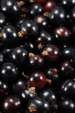 Blackcurrants black currants Royalty Free Stock Photo