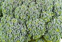 Close up of an organic broccoli Stock Images