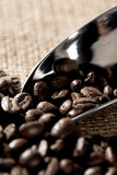 Close-up on organic coffee beans Royalty Free Stock Photography