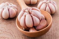 Close Up organic garlic in wooden spoon on the teak wood backgro Stock Image