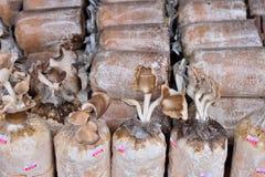 Close up of organic mushroom bag Royalty Free Stock Image