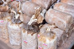 Close up of organic mushroom bag Stock Photo