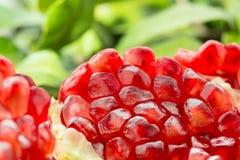 Close up of an organic pomegranate fruit Stock Photo