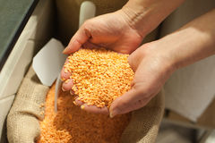 Close up of organic red lentils. Healthy food ingredient. Bio food concept Stock Photos