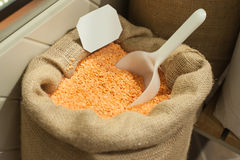 Close up of organic red lentils. Healthy food ingredient. Bio food concept Royalty Free Stock Images