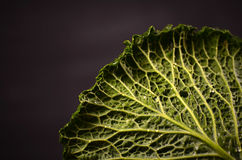 Close up of organic savoy cabbage on the wooden background Royalty Free Stock Image