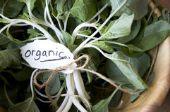 Close up organic tag in bowl Stock Images