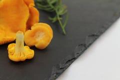 Close up of organic vegan fresh harvested mushrooms chanterelle Royalty Free Stock Photography